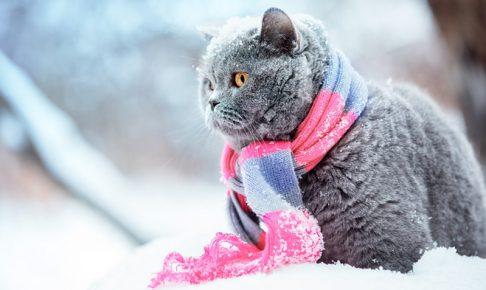 雪の中でマフラーをまいた猫