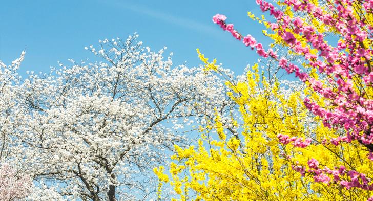 色とりどりの花の木