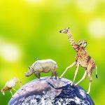 地球を歩く動物たち